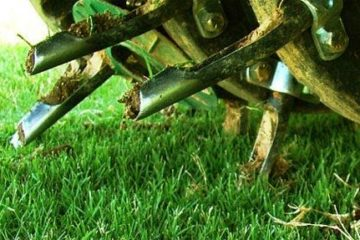 Aeration & Overseeding